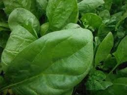 butterflay20spinach.jpg