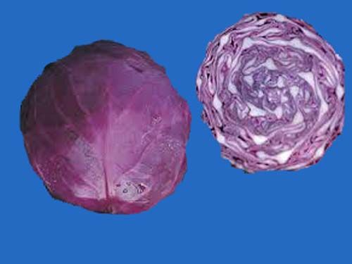 cabbage2C20red20acre.jpg