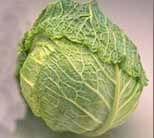 cabbage_savoy.jpg