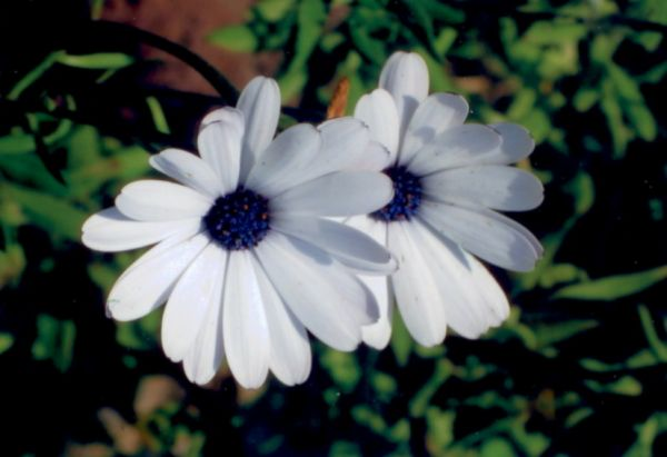 flower_sky_and_ice.jpg