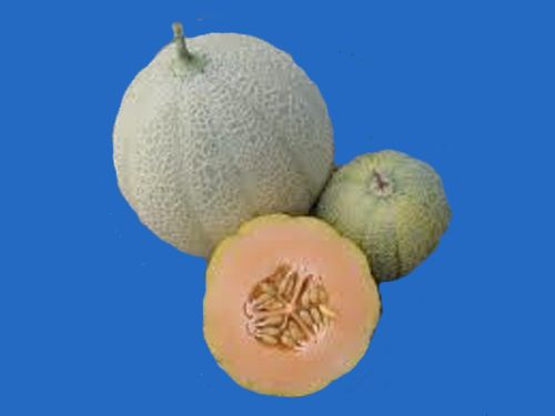 fruit2C20minnesota20midget20melon.jpg