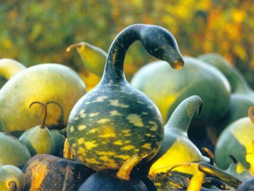 gourd_mix.jpg