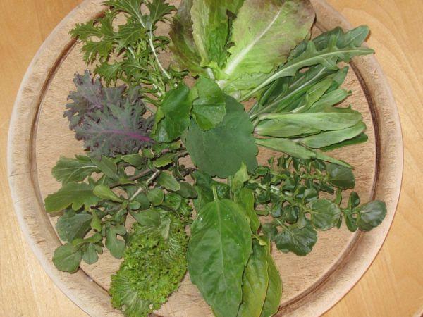 greens2C20spring20mix.jpg