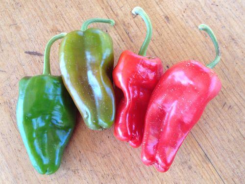 pepper2C20padron28229.jpg