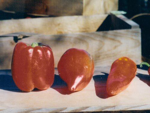 sweet_red_pepper.jpg