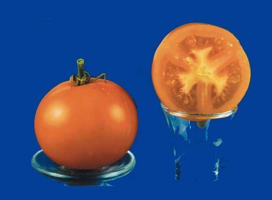 tomato2C20Czechs20excellent20yellow.jpg