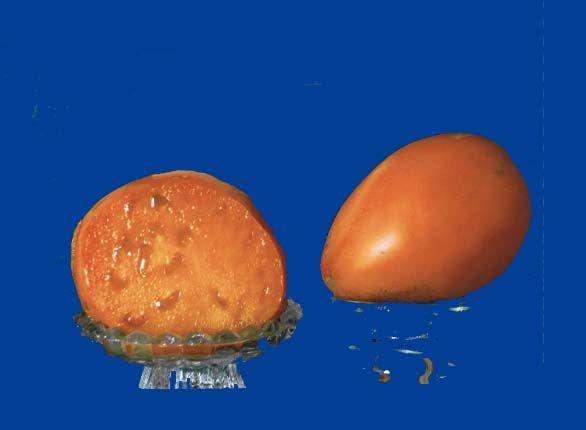 tomato2C20Golden20oxheart.jpg