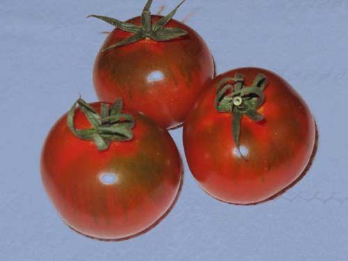 tomato2C20Mercato20Central20Saladette.jpg