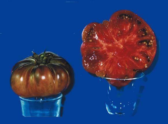 tomato2C20Noire20de20cose20Boeuf.jpg