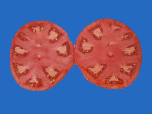 tomato2C20ace205520copy.jpg