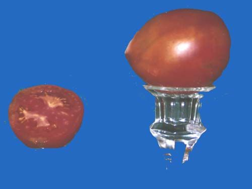 tomato2C20anna20russian.jpg