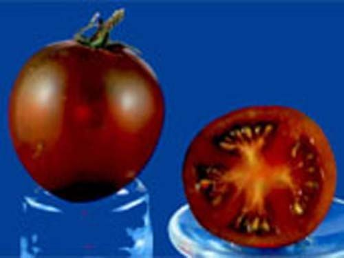 tomato2C20black20Russian28229.jpg