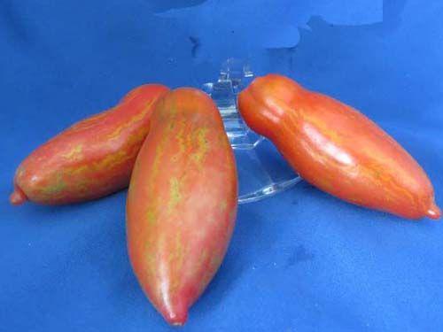 tomato2C20cassidys20folly28229.jpg