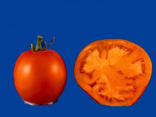 tomato2C20djena20lee.jpg