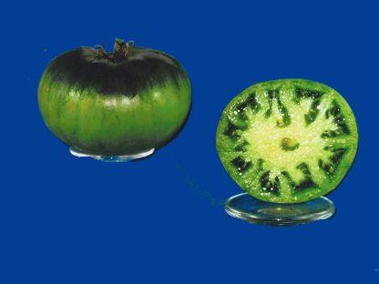 tomato2C20dorotheas20green20rob.jpg