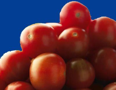 tomato2C20gardeners20delight.jpg