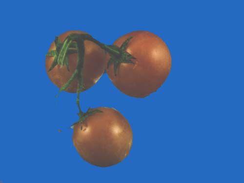 tomato2C20giallo20a20grappoli.jpg