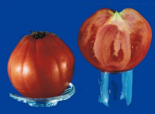 tomato2C20giant20yugoslavian.jpg