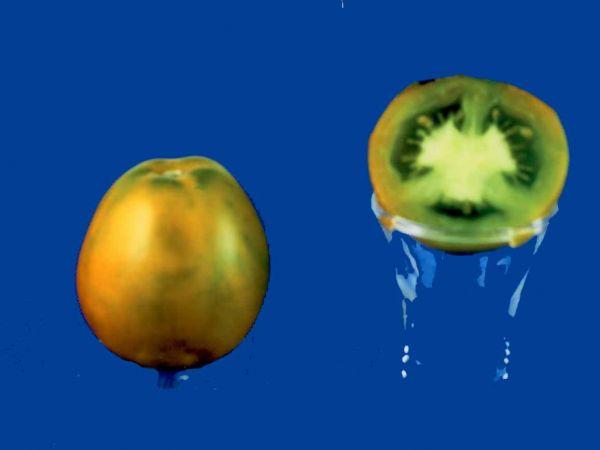 tomato2C20lime20green20salad.jpg