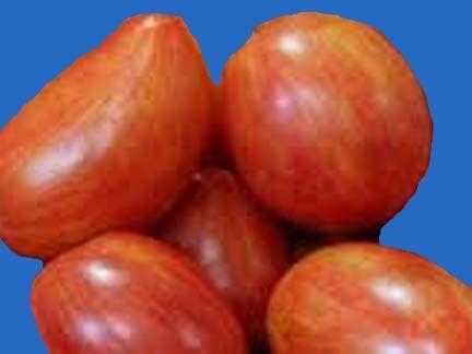 tomato2C20maglia20rosa20copy.jpg
