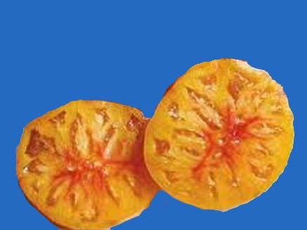 tomato2C20marvel20striped20copy.jpg