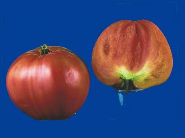 tomato2C20marys20oxheart.jpg