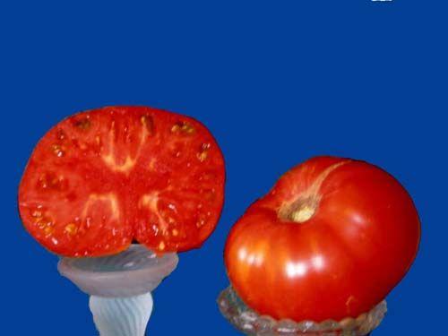 tomato2C20motgage20Lifter.jpg