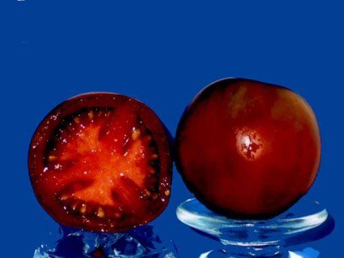 tomato2C20nyagous.jpg