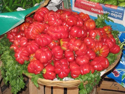 tomato2C20oaxacan.jpg