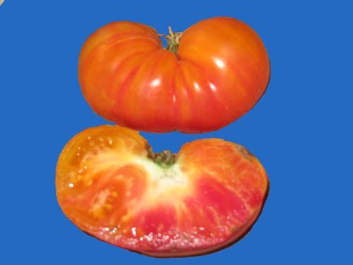 tomato2C20oaxan20jewel.jpg