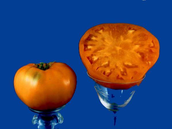 tomato2C20persimmon.jpg