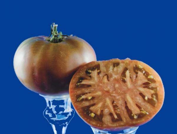 tomato2C20sarah20black.jpg