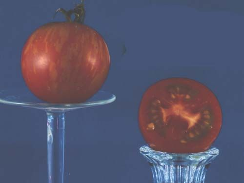 tomato2C20tigrella.jpg