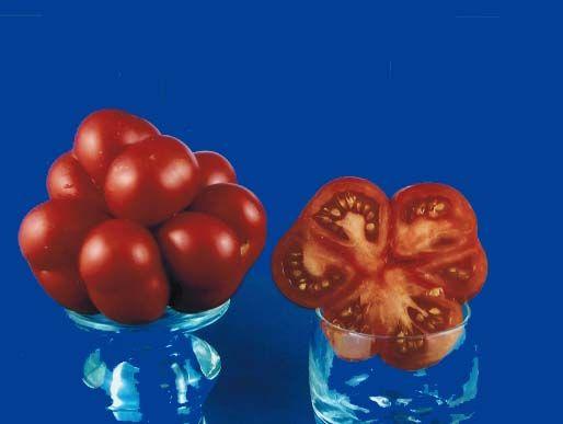 tomato2C20voyage.jpg