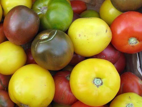 tomatoes2C20large2C20pic.jpg