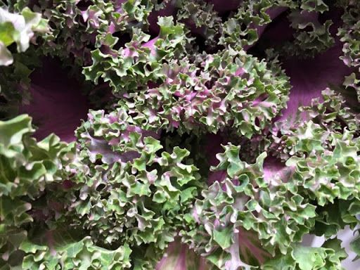 variagated20ornamental20kale.jpg