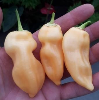 Suger rush pepper